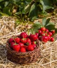 Benedek Gyümölcsfarm fotózás (2)