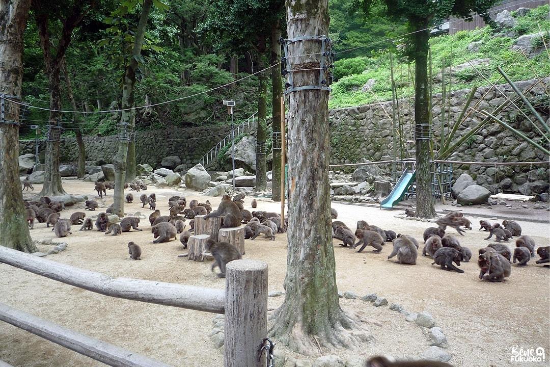 Takasaki yama, la montage aux singes, Ôita