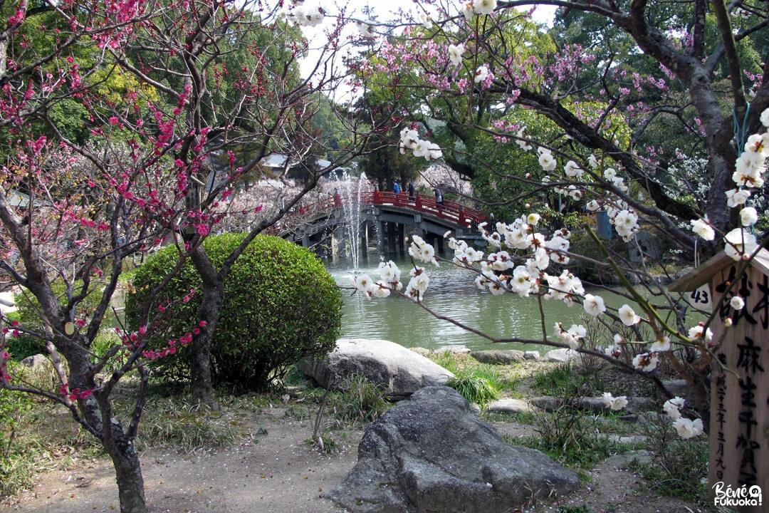 Pruniers à Dazaifu, préfecture de Fukuoka