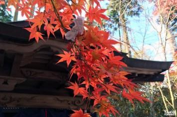 Erables du temple Nomiyama Kannon-ji, Fukuoka