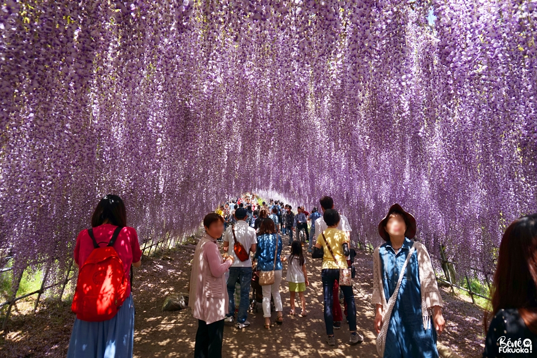Le jardin Kawachi Fuji-en, Kita-Kyûshû, Fukuoka