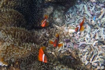Nemo, Ôgamijima, Miyakojima, Okinawa