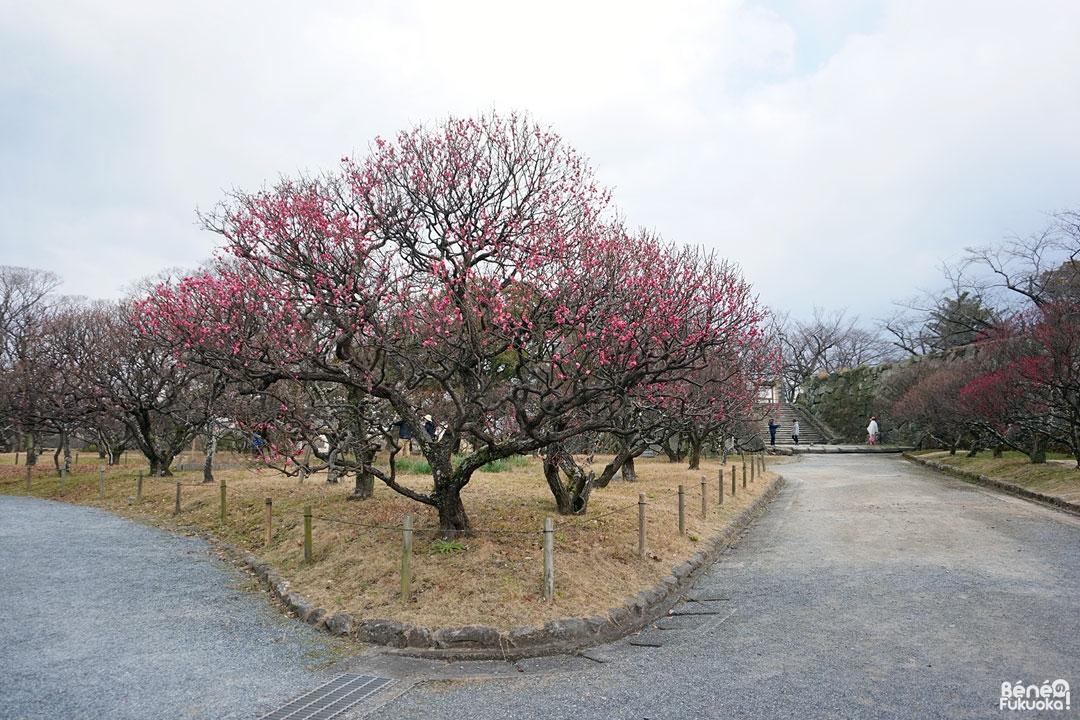 Parc Maizuru, Fukuoka