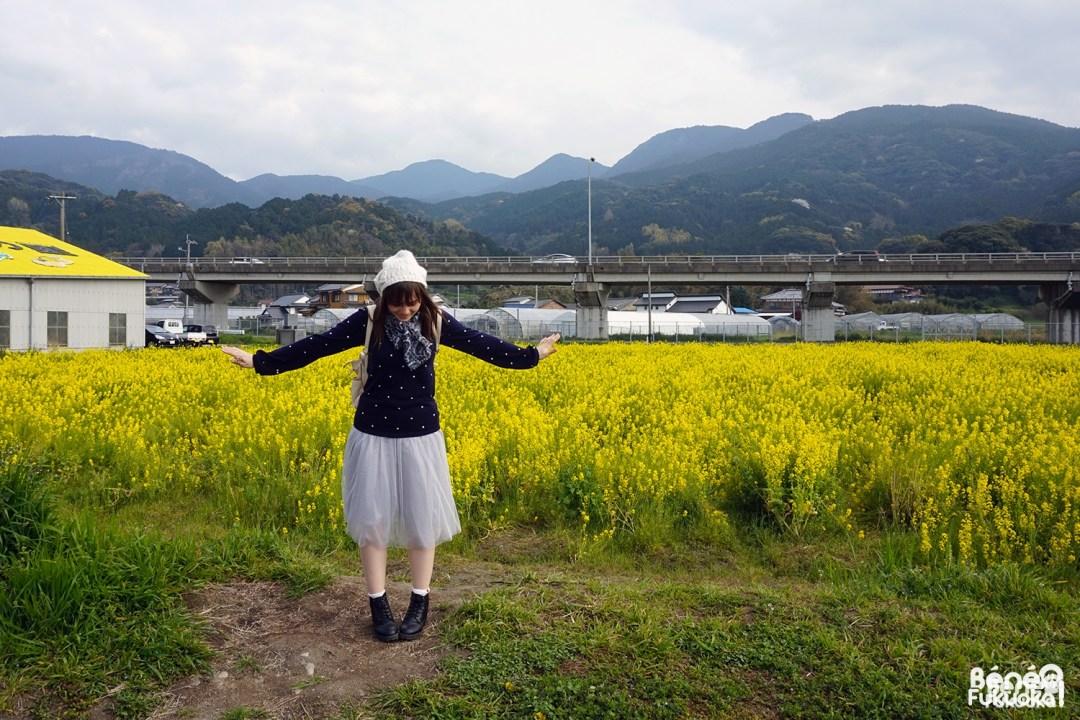 Béné, champ de colza à Fukuyoshi