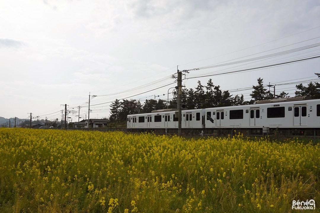 JR Chikuhi et colza, Fukuyoshi