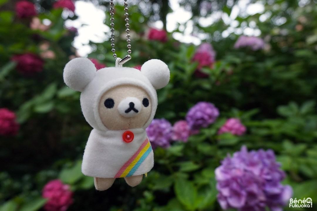 Jardin d'hortensias et Rillakuma saison des pluies, sanctuaire Hakozaki, Fukuo