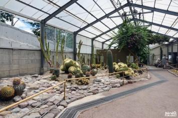 Cactus au Yama Jigoku, l'enfer de la montagne, Beppu