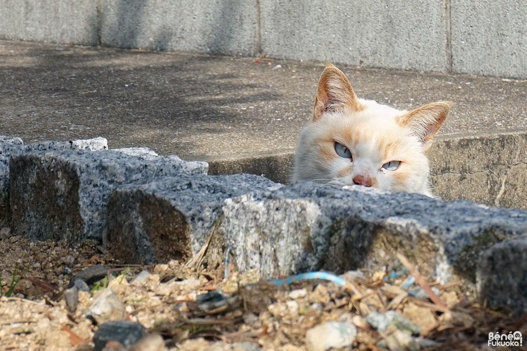 Chat à Genkaijima, Fukuoka
