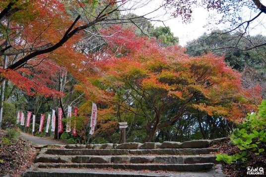 Erables au sanctuaire Tenkai Inari de Dazaifu, Fukuoka