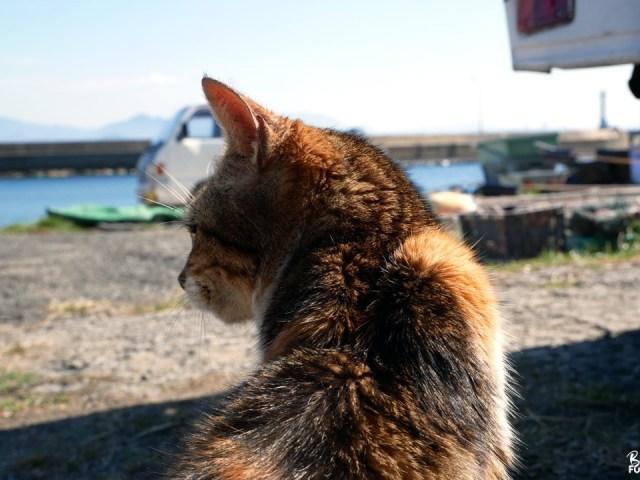 Ainoshima, l'île aux chats de Fukuoka