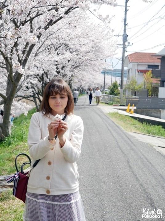 Cerisiers au bord de la rivière Zuibai-ji à Itoshima, préfecture de Fukuoka