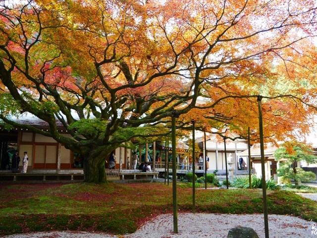 [Itoshima] Excursion automnale au Raizan Sennyo-ji Daihioin