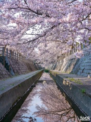 Coin secret à cerisiers, Fukuoka
