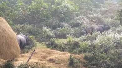 Photo of জঙ্গল থেকে বেরিয়ে লোকালয়ে গণ্ডার দম্পতি