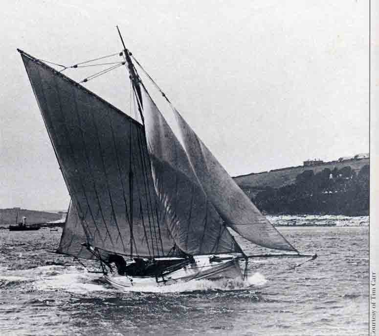 curlew-falmouth012-rsb