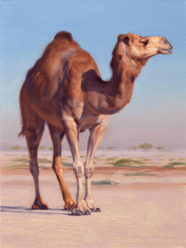 Wilderness Camel