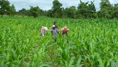 Photo of Le gouvernement travaille à booster l'agriculture biologique et écologique au Bénin