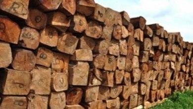 Photo of Les professionnels du secteur bois se félicitent des réformes entreprises par le gouvernement de Patrice Talon