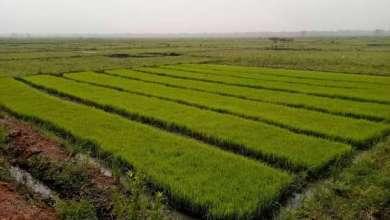 Photo of Aménagements hydro-sylvio-agricoles : Les chantiers financés par l'UEMOA bientôt rétrocédés au Gouvernement au profit des bénéficiaires