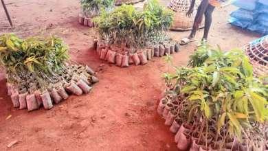 Photo of Remise d'équipements dans le cadre du Projet TCP BEN 3705 : Le MAEP et la FAO luttent contre l'insécurité alimentaire et nutritionnelle à Za Kpota