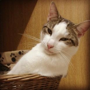 Tui the Cat
