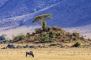 ABWBenny-Rebel-Fotoworkshop-Tansania