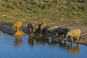 ABY-Benny-Rebel-Fotoreise-Suedafrika-Elefant