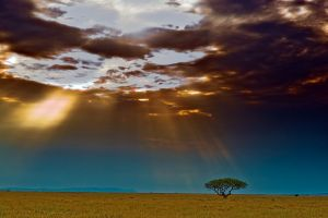 ACM-Benny-Rebel-Fotoworkshop-Serengeti-Tansania