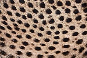ACN-Benny-Rebel-Fotoworkshop-Gepard-Suedafrika