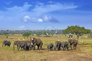 ACZ-Benny-Rebel-Fotoreise-Tansania-Elefant