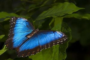 ADT-Benny-Rebel-Fotoworkshop-Costa-Rica-Schmetterling