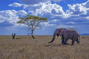 AGR-Benny-Rebel-Fotoreise-Tansania-Elefantt