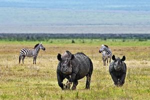 AIw-Benny-Rebel-Fotoreise-Tanzania-Nashorn-Spitzmaul