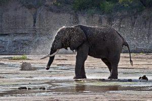 AJj-Benny-Rebel-Fotoreise-Tansania-Elefant