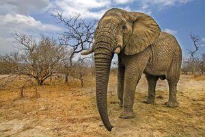 AJm-Benny-Rebel-Fotoreise-Suedafrika-Elefant