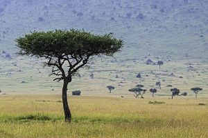 AKa-Benny-Rebel-Fotoreise-Maasai-Mara-Kenia