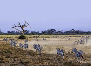 AKm-Benny-Rebel-Fotoreise-Kenia-Zebra