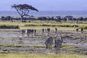 AKn-Benny-Rebel-Fotoreise-Kenia-Zebra