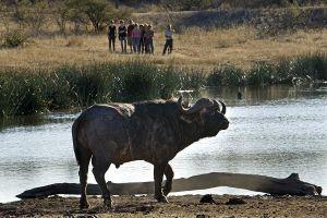ANc-Benny-Rebel-Fotoreise-Suedafrika-Walking-Safari