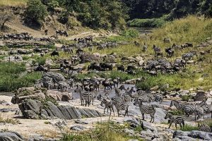 AOz-Benny-Rebel-Fotoreise-Kenia-Migration