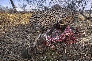 AQrBenny-Rebel-Fotoreise-Suedafrika