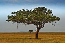 BZBenny-Rebel-Fotoreise-Tansania