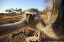 CJBenny-Rebel-Fotoreise-Suedafrika