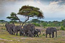 DLBenny-Rebel-Fotoreise-Tansania