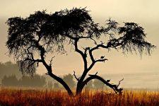 DNBenny-Rebel-Fotoreise-Suedafrika