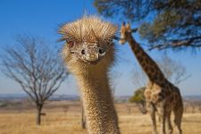 DRBenny-Rebel-Fotoreise-Suedafrika