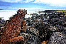 EFBenny-Rebel-Fotoreise-Galapagos