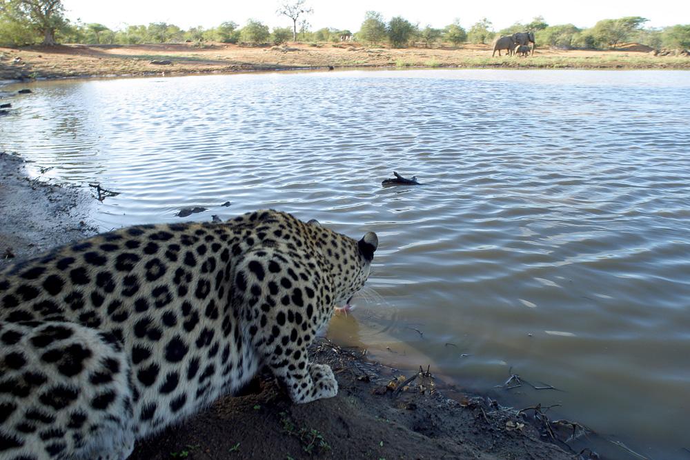 Fotoreise Kenia, Benny Rebel, Leopard