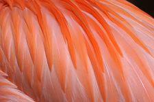 KM-Benny-Rebel-Fotoreise-Flamingo