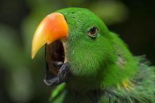 AA-Benny-Rebel-Fotoreise-Papagei